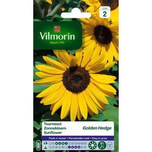 VILMORIN Tournesol Golden Hedge floraison tr?s longue
