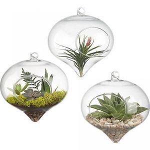 VASE - SOLIFLORE Petit Pot Rond Verre Suspendus Vase Plantes Terrar