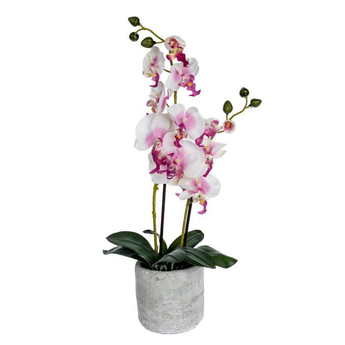 orchidee 5 euros