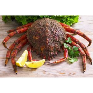 FRUITS DE MER   Araignée de mer - 3 pièces -  2kg  Produits Frais